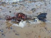 """Phi thường - kỳ quặc - Xác chết """"người cá"""" dạt vào bờ biển nước Anh"""