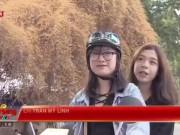 Bạn trẻ - Cuộc sống - Tâm sự buồn về cây hoa giấy gây xôn xao ở Hà Nội