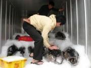 Thị trường - Tiêu dùng - Xuất khẩu cá ngừ sang Trung Quốc tăng vọt