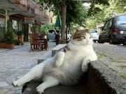 Phi thường - kỳ quặc - Mèo ú với dáng ngồi oai vệ được dựng tượng sau khi chết