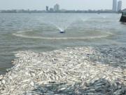 """Tin tức trong ngày - Bí thư Hà Nội: """"Phải tìm ra nguyên nhân cá chết để xử lý"""""""
