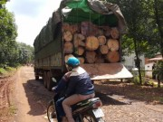 An ninh Xã hội - Biên phòng nổ súng, lâm tặc vẫn táo tợn cướp lại gỗ