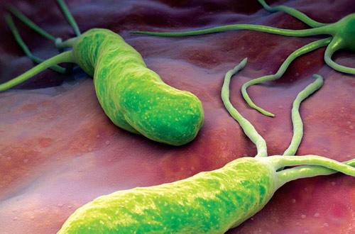 vi khuẩn hp gây hại