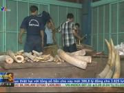 Thị trường - Tiêu dùng - TP. HCM: Bắt vụ nhập lậu ngà voi có thể lên tới hàng trăm tỷ