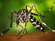 Sức khỏe đời sống - Thêm 2 người Việt Nam nhiễm vi rút Zika
