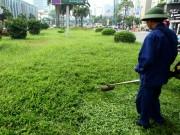 Tin tức trong ngày - Hà Nội nhộn nhịp cắt cỏ trở lại sau 3 tháng tạm dừng