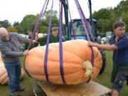 Phi thường - kỳ quặc - Quả bí ngô khổng lồ nặng 1 tấn phá kỉ lục nước Anh