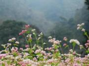Du lịch - Mùa hoa tam giác mạch trên cao nguyên đá Hà Giang