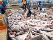 Thị trường - Tiêu dùng - Cá tra tăng giá mạnh vì khan hiếm