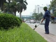 Tin tức trong ngày - Hà Nội sẽ cắt cỏ ưu tiên từng khu vực