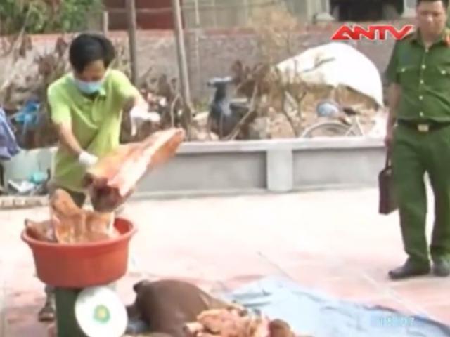 """Phát hiện lò mổ chuyên thu gom lợn chết về """"xẻ thịt"""""""