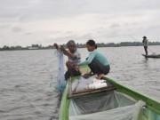 Tin tức trong ngày - Đồng bằng Sông Cửu Long: Dân rốn lũ đỏ mắt tìm cá