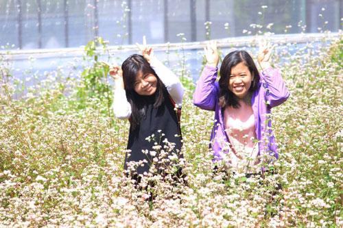 Vườn hoa hoa tam giác mạch đẹp mơ màng giữa Đà Lạt - 8