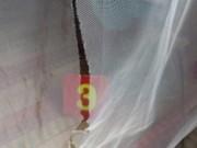 An ninh Xã hội - Băng trộm chuyên rạch màn vùng U Minh Thượng