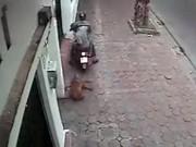 Tin tức trong ngày - Clip: Cẩu tặc kéo lê chó giữa phố Hà Nội lúc sáng sớm