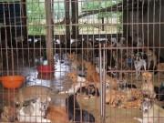 Tin tức trong ngày - Người Việt ăn thịt chó nhiều thứ 2 thế giới