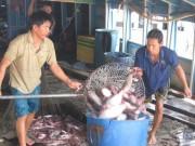 Thị trường - Tiêu dùng - Giá cá tra bất ngờ tăng vọt, nông dân tiếc hùi hụi