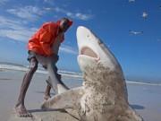 Thế giới - Nam Phi: Ngư dân liều mạng kéo đuôi cá mập dữ