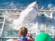 Chung lồng với cá mập 'điên', VĐV lặn suýt bỏ mạng