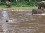 Thế giới - Điều xảy ra khi huấn luyện viên giả chết để thử lòng voi