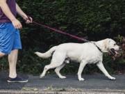 Tin tức trong ngày - HN sẽ xử lý quyết liệt chó không rọ mõm ở phố đi bộ