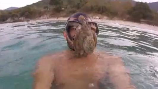 Bạch tuộc lao vào mặt thợ lặn, bám chặt quyết không rời
