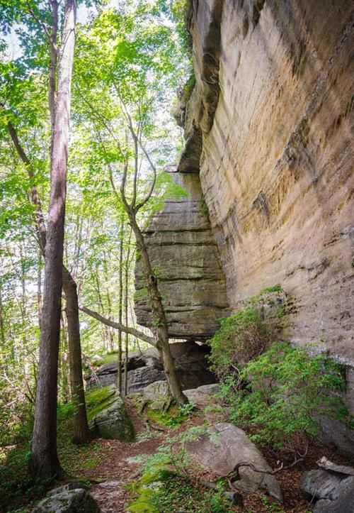 Khu rừng bí mật đẹp mê hồn trong lòng nước Mỹ - 2