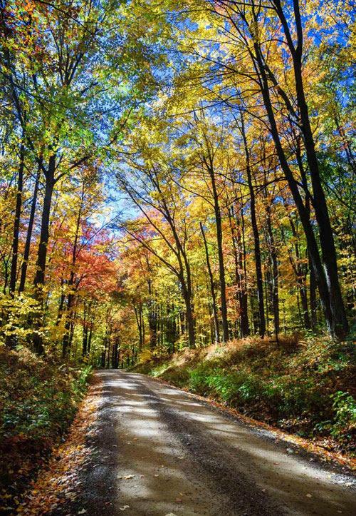 Khu rừng bí mật đẹp mê hồn trong lòng nước Mỹ - 3