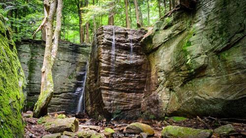 Khu rừng bí mật đẹp mê hồn trong lòng nước Mỹ - 5