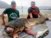 Thế giới - Kinh ngạc cá trê khổng lồ 90kg, dài hơn 2m ở Tây Ban Nha
