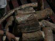 Thị trường - Tiêu dùng - Lô ngà voi tiền tỉ từ châu Phi bị phát hiện