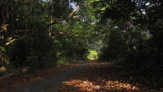 Những ngày đi trốn trên đảo Nam Du - 13