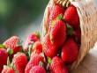 11 thực phẩm cung cấp nhiều iot nhất