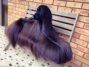 Phi thường - kỳ quặc - Chú chó nổi tiếng vì lông dài lượt thượt như suối tóc