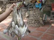 Thị trường - Tiêu dùng - Tận diệt chim trời kiếm tiền triệu mỗi ngày