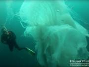 Phi thường - kỳ quặc - Thợ lặn gặp sứa khổng lồ to hơn người cực hiếm