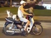 Thế giới - Báo Anh kinh ngạc thanh niên VN đi xe máy chở 4 chú mèo