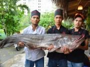 """Tin tức trong ngày - Tận thấy cá """"khủng"""", phải 3 người khiêng ở Sài Gòn"""
