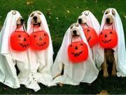 """Tranh vui - """"Nô nức"""" cùng chó mèo đi dự lễ hội Halloween"""