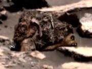 Phi thường - kỳ quặc - Ảnh của NASA cho thấy xác gấu nâu trên Sao Hỏa?
