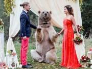 Phi thường - kỳ quặc - Cặp đôi làm đám cưới cùng gấu nâu nặng gần tạ rưỡi