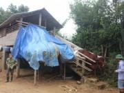 """Xem  """" nhà lầu """"  tránh lũ cho trâu bò ở Quảng Trị"""
