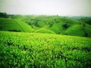 Du lịch - Một ngày làm nông dân tại nông trường Mộc Châu