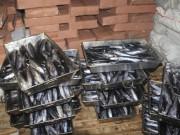 Tin tức trong ngày - Hà Tĩnh còn 320 tấn hải sản không an toàn chưa tiêu hủy