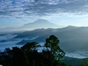 Phi thường - kỳ quặc - Phát hiện cây nhiệt đới cao nhất thế giới