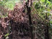 Tin tức trong ngày - Phát hiện thi thể người đàn ông phân hủy trong rừng