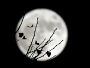 Thế giới - Ngắm siêu trăng lớn nhất 70 năm qua trên toàn thế giới