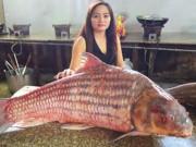 Tin tức trong ngày - Cặp cá sọc dưa khổng lồ, nặng gần 100kg mắc lưới ngư dân