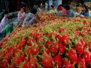 Thị trường - Tiêu dùng - Phạt 1 thương lái Trung Quốc mua thanh long trái phép
