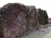 Thế giới - Động đất kéo đáy biển lên cao 2m ở New Zealand